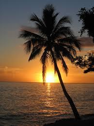 palms-091014